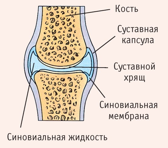 1 metatarsofalangealis ízület artrózisa 1 fokos kezelés esetén)